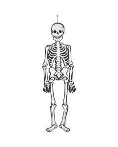 Skelett, H: 120 cm, 300 g, Weiß, 1 Stck.