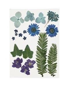 Gepresste Blüten und Blätter, Blau, 19 sort./ 1 Pck.