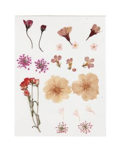 Gepresste, getrocknete Blumen, Hellrosa, 1 Pck.