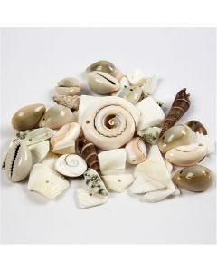 Strandmuschelperlen, Größe 9-40 mm, Lochgröße 1-1,5 mm, 120 g/ 1 Pck.