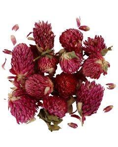 Trockenblumen, Rotes Kleeblatt, L: 1,5-2,5 cm, D: 1 - 1,5 cm, Flieder, 1 Pck.