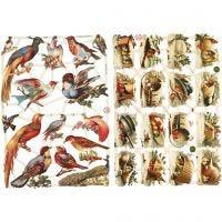 Vintage-Glanzbilder, Vögel, 16,5x23,5 cm, 2 Bl./ 1 Pck