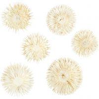 Getrocknete Blütenköpfe, D: 3-5 cm, 6 Stk/ 1 Pck