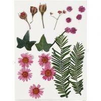 Gepresste Blüten und Blätter, Rosa, 19 sort./ 1 Pck