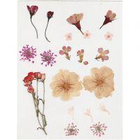 Gepresste, getrocknete Blumen, Hellrosa, 1 Pck