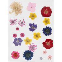 Gepresste, getrocknete Blumen, Sortierte Farben, 1 Pck