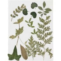 Gepresste Blätter, Grün, 1 Pck