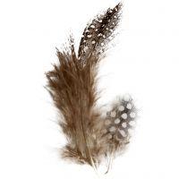 Perlhuhnfedern , Braun, 3 g/ 1 Pck
