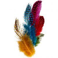 Perlhuhnfedern , Sortierte Farben, 3 g/ 1 Pck