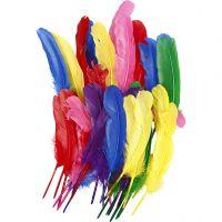 Federn, L: 20 cm, Sortierte Farben, 36 Stk/ 1 Pck