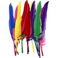 Federn, L: 27 cm, Sortierte Farben, 12 Stk/ 1 Pck