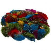 Perlhuhnfedern , Sortierte Farben, 50 g/ 1 Pck