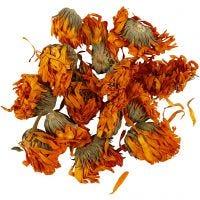 Trockenblumen, Ringelblume, D: 1 - 1,5 cm, Golden, 1 Pck