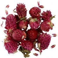 Trockenblumen, Rotes Kleeblatt, L: 1,5-2,5 cm, D: 1 - 1,5 cm, Flieder, 1 Pck