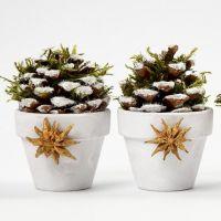 Blumentöpfe mit Pinienzapfen