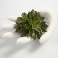 Hand aus Gipsguss, gegossen in einem Einmal-Handschuh