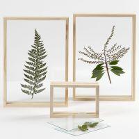 Getrocknete Pflanzenblätter in transparenten Rahmen